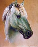 Arabian Horse Head Study
