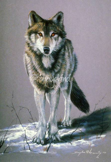 timber wolf study by artloversonline