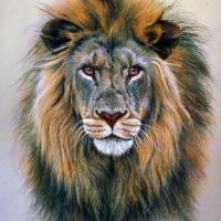 """Head Study of a Lion"" by ArtLoversOnline"