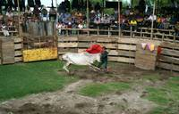Bloodless Bullfight in Guatemala