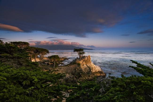 The Lone Cypress, Pebble Beach, California