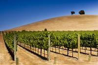 Wine Country, Napa, California