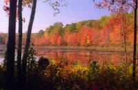 Autumn foliage in New England