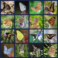 Butterfly Squares Collage by Carol Groenen