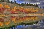 Mill Pond by Alan Sachanowski