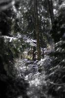 snowy Oregon forest 5