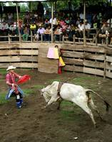 San Pedro Bullfight Roper and bull