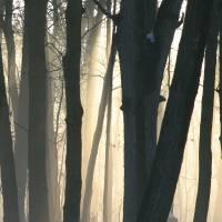 Mystic Woods by Roger Dullinger