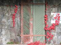 Red Ivy and Green Door - Sandy Hook NJ