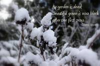 My Garden is Dead, snow