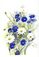 Blue and White Daisies