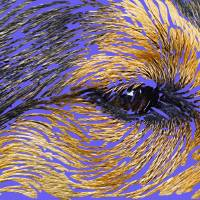 Eye of the Dog Art Prints & Posters by Dale Halbur