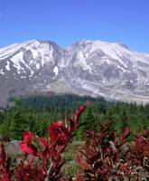 Mt St Helens - 30 Years Later