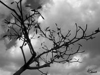clouds and branches
