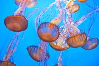 Floating Jellies