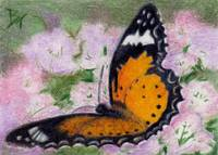 Butterfly Flutter aceo