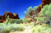 Outback terrain, Kings Canyon - Australia