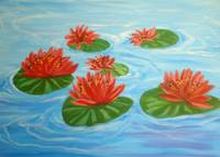 6 Water Lilly