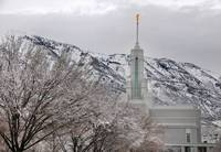 mount timpanogos temple dusting of snow on tree 20