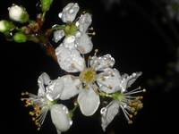 Small White Flowers in Rain