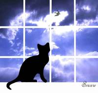 Cat on the Windowsill silhouette