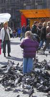 Little Girl with Big Pidgeon Problem