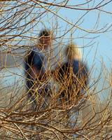 Couple Behind Willow Branches