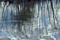 Millbury Spring Reflection l