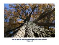 scripture like a tree_edited-1
