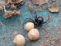 animal insect spider arachnid_002