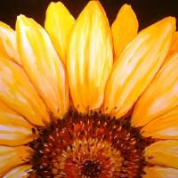 SUNFLOWER SUNRISE 2006 by Marcia Baldwin