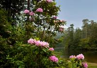 The Rhododendron Lake