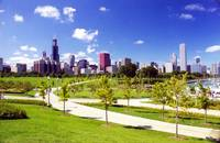 Tree Lined Chicago Skyline