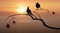 Two Crows in Golden Sunset