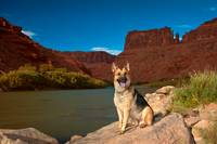 Cody On The Colorado River In Utah