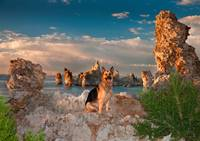 Cody At Mono Lake