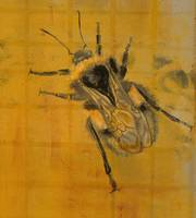 Prosaic Worker (Honey Bee) - Detail View