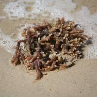 Sea Life Washing Ashore 4 SQ