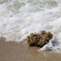 Sea Life Washing Ashore 2 SQ