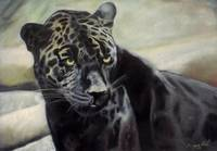 black jaguar painting for sale