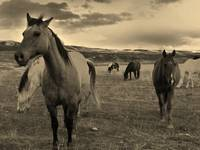 horses from the ranch