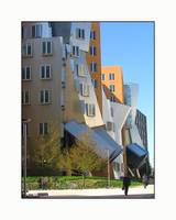Frank Gehry MIT Building Street Front