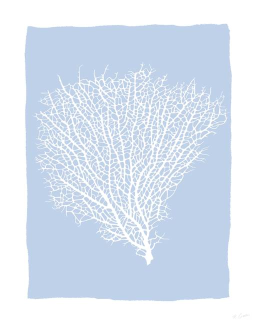 White coral fan by robincowles publicscrutiny Images