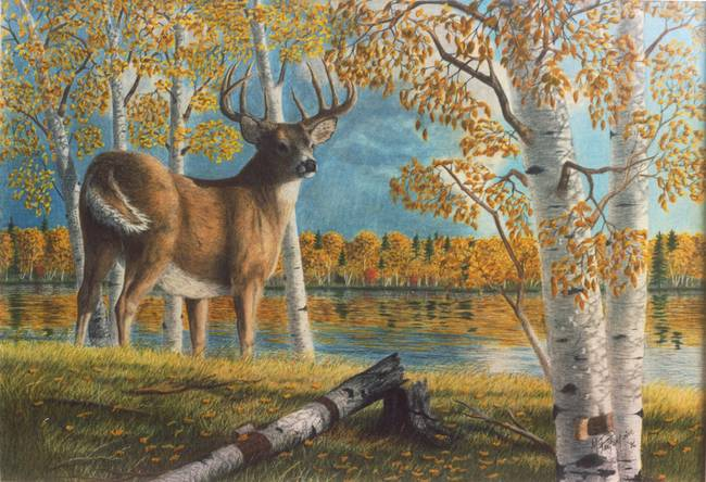 stunning  u0026quot whitetail deer u0026quot  colored pencil drawings and