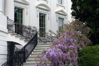 The White House Stairs