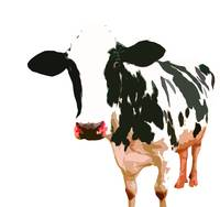 Cow in White World
