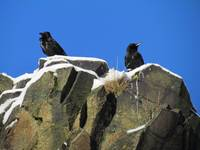 Birds on the Crags