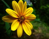 Vibrant Yellow Flower