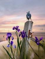 Fish Crow and Wild Irises