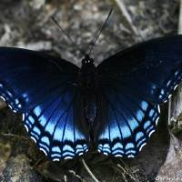 As Speckled Wings Shimmer Art Prints & Posters by GerardoMPhotography